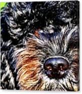 Shaggy Black Dog Canvas Print