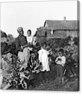 Sharecropper Family, 1902 Canvas Print