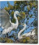 Sharing The Nest Canvas Print