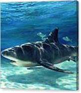 Shark In Depth Canvas Print