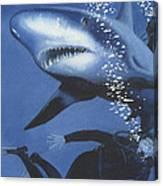 Sharkbait Canvas Print