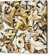 Sharks Teeth Canvas Print