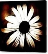Shasta Daisy - Sepia Tones Photograph Canvas Print