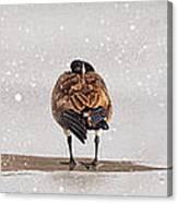 Shawnee Park Geese Canvas Print