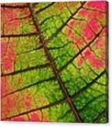 Shed Foliage Canvas Print