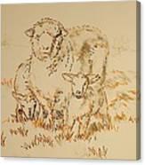 Sheep And Lambs Canvas Print