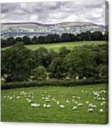 Sheep And More Sheep Canvas Print
