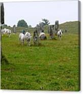 Sheep And Stones At Avebury Canvas Print