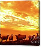 Sheep At Sunrise Canvas Print