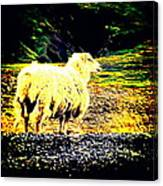 Don't You Look At Me With That Sheep Attitude  Canvas Print