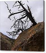 Sheep Creek Canyon Wyoming 10 Canvas Print