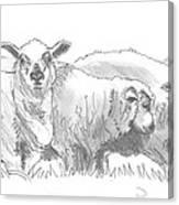 Sheep Drawing Canvas Print