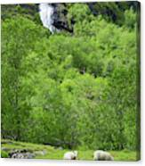 Sheep In A Grassy Mountain Field Canvas Print