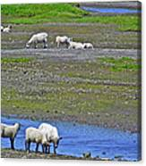 Sheep In Branch-nl Canvas Print
