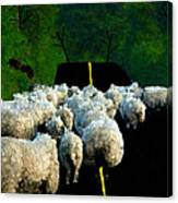 Sheep In Ireland Canvas Print
