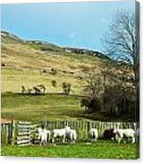 Sheep In Meadow Canvas Print