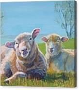 Sheep Lying Down Canvas Print