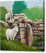 Sheep On A Rock Wall Canvas Print