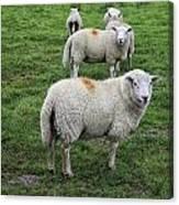 Sheep On Parade Canvas Print