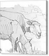 Sheep Pencil Drawing  Canvas Print