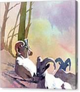 Sheep Shape Canvas Print