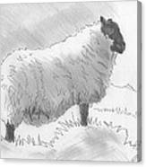 Sheep Sketch Canvas Print