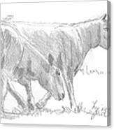 Sheep Walking Canvas Print