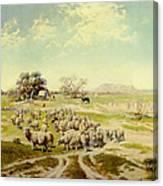 Sheepherding Montana Canvas Print