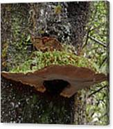 Shelf Mushroom With Moss Canvas Print