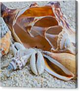 Shell Collectors Dream Canvas Print