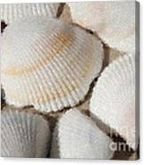 Shell Effects 1 Canvas Print