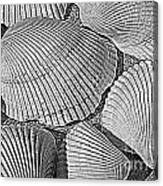 Shell Effects 10 Canvas Print
