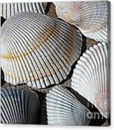 Shell Effects 5 Canvas Print