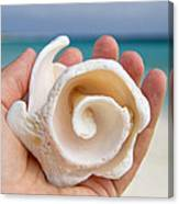 Shell In Hand Cozumel Canvas Print