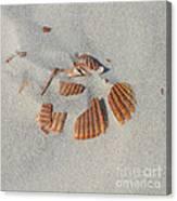 Shell Jigsaw Canvas Print