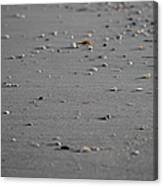 Shell Line Canvas Print