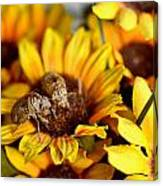 Shell Of A Bug On Flower Canvas Print