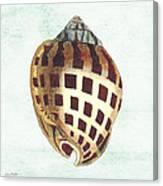 Shell Treasure-b Canvas Print