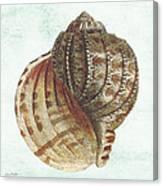 Shell Treasure-c Canvas Print