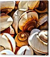 Shells Galore Canvas Print