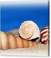 Shells In Sand Canvas Print