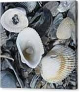 Shells In Shells 2 Canvas Print