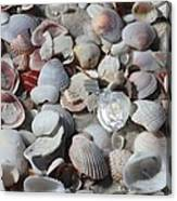 Shells On Treasure Island Canvas Print