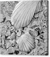 Shells One Canvas Print