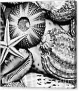 Shellscape In Monochrome Canvas Print
