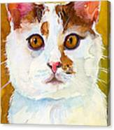 Shelter Sweety Two Canvas Print