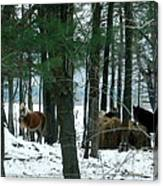 Sheltered In The Trees Canvas Print