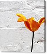 Seriously Orange - Sheltered Canvas Print