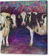 Sheltering Cows Canvas Print