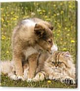 Sheltie Puppy And Persian Cat Canvas Print